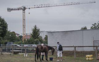 bien-etre-cheval-2020-cheval-membres-les-amis-du-cheval-strasbourg