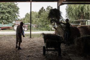 foin-association-les-amis-du-cheval-strasbourg