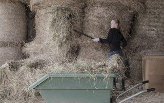 foin-brouette-chevaux-association-les-amis-du-cheval-strasbourg