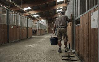 nourrissage-chevaux-association-les-amis-du-cheval-strasbourg