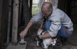 nourrissage-chat-association-les-amis-du-cheval-strasbourg