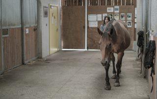 cheval-au-pas-association-les-amis-du-cheval-strasbourg