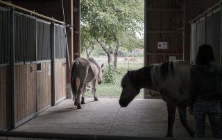 sortie-chevaux-les-amis-du-cheval-strasbourg