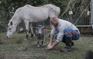 nourrissage-cheval-chevre-association-les-amis-du-cheval-strasbourg