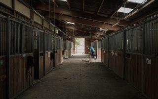 nettoyage-hangar-boxes-chevaux-association-les-amis-du-cheval-strasbourg
