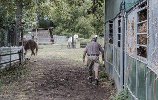pres-chevaux-association-les-amis-du-ceval-strasbourg