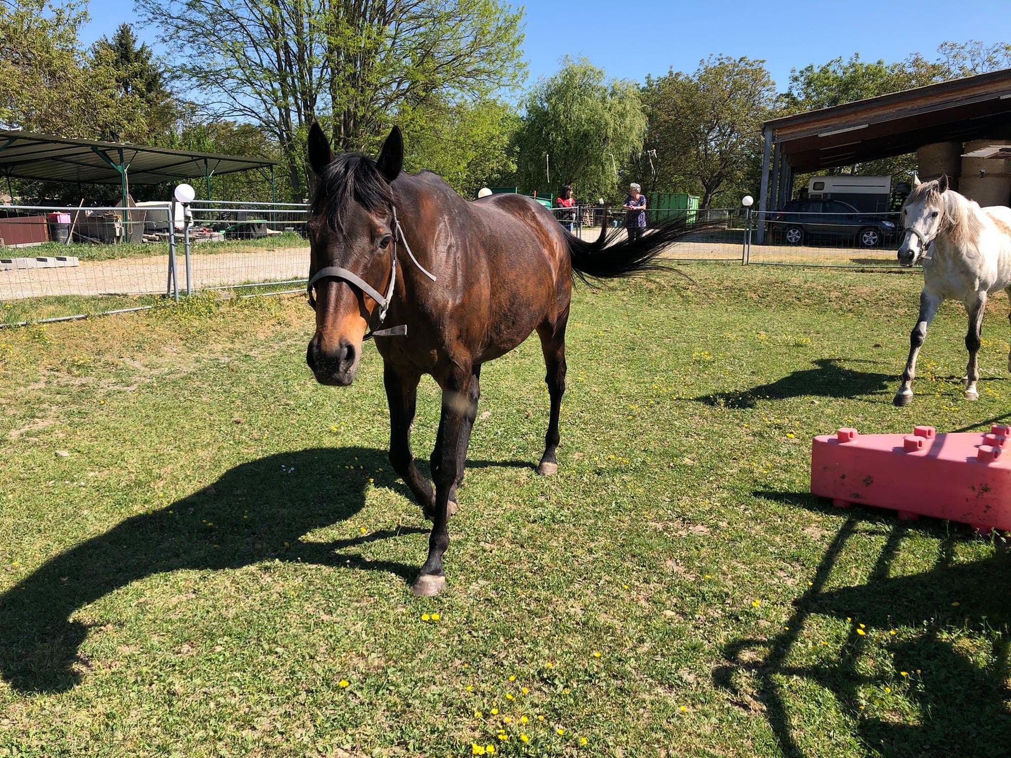 chevaux-pres-don-association-les-amis-du-cheval-strasbourg