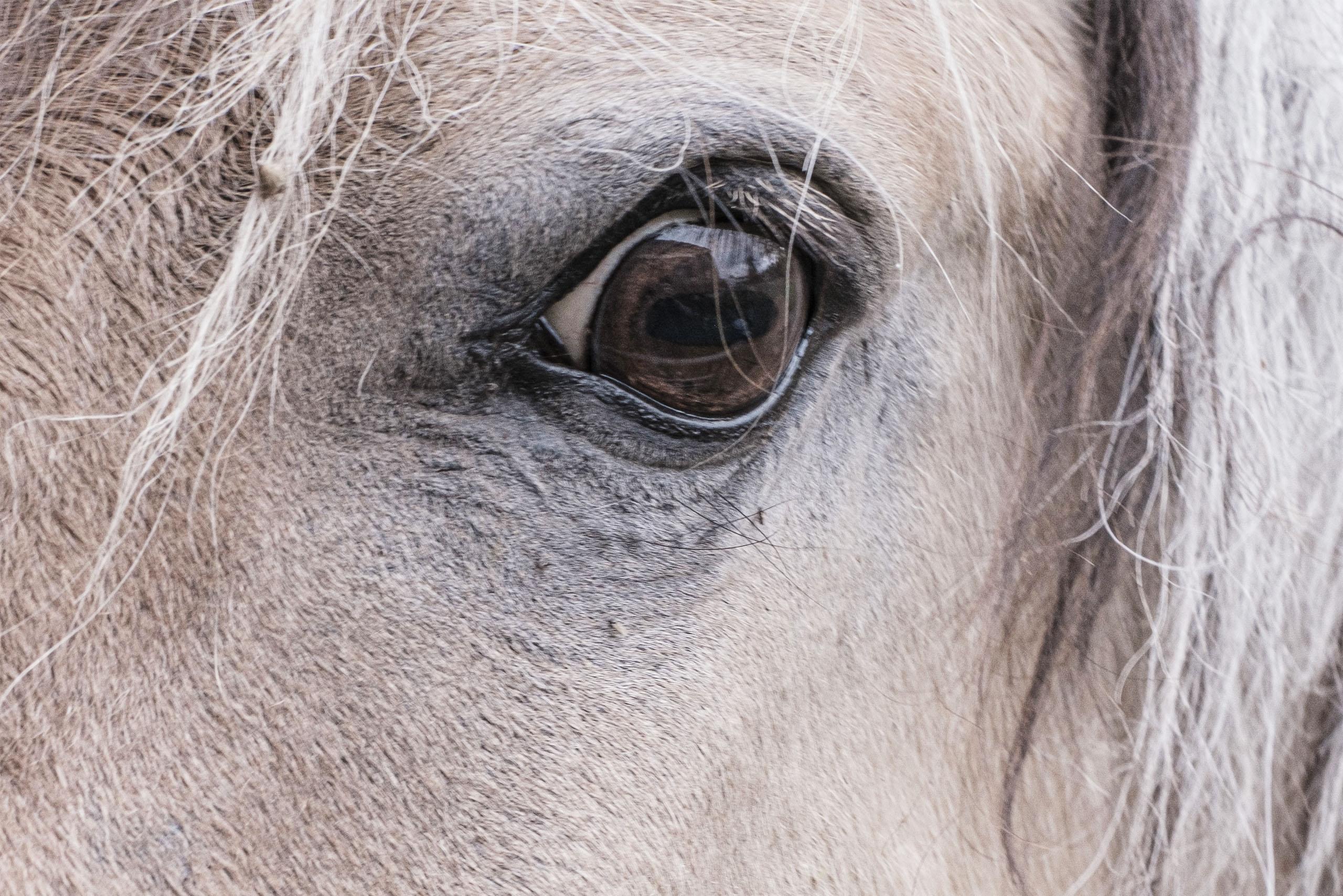 cheval-association-les-amis-du-cheval-de-strasbourg